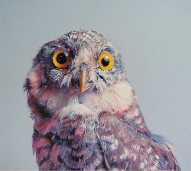 Gerçekçi baykuş resimleri