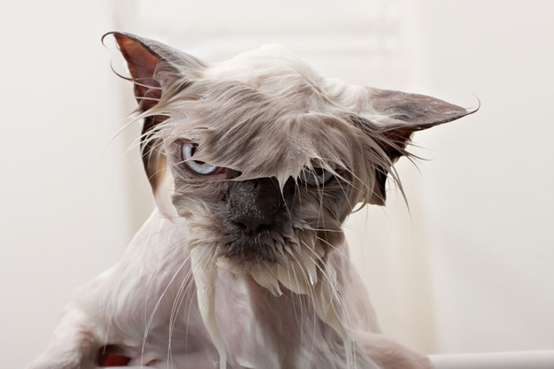 funny-wet-cats-2