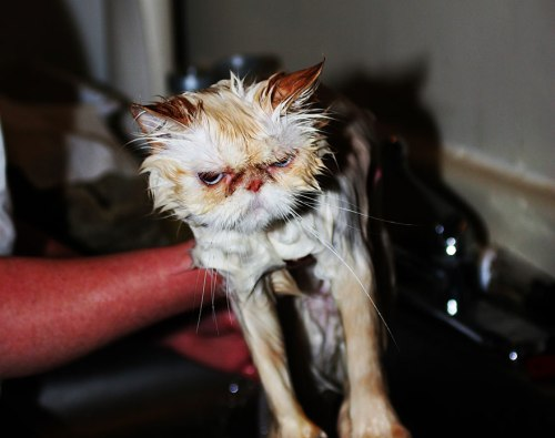 funny-wet-cats-23