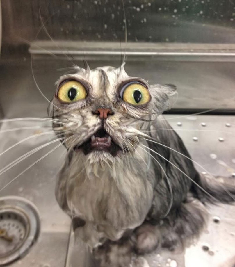funny-wet-cats-36