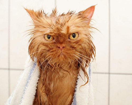 funny-wet-cats-4