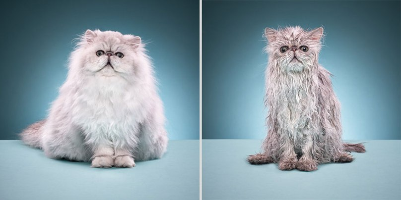 funny-wet-cats-7